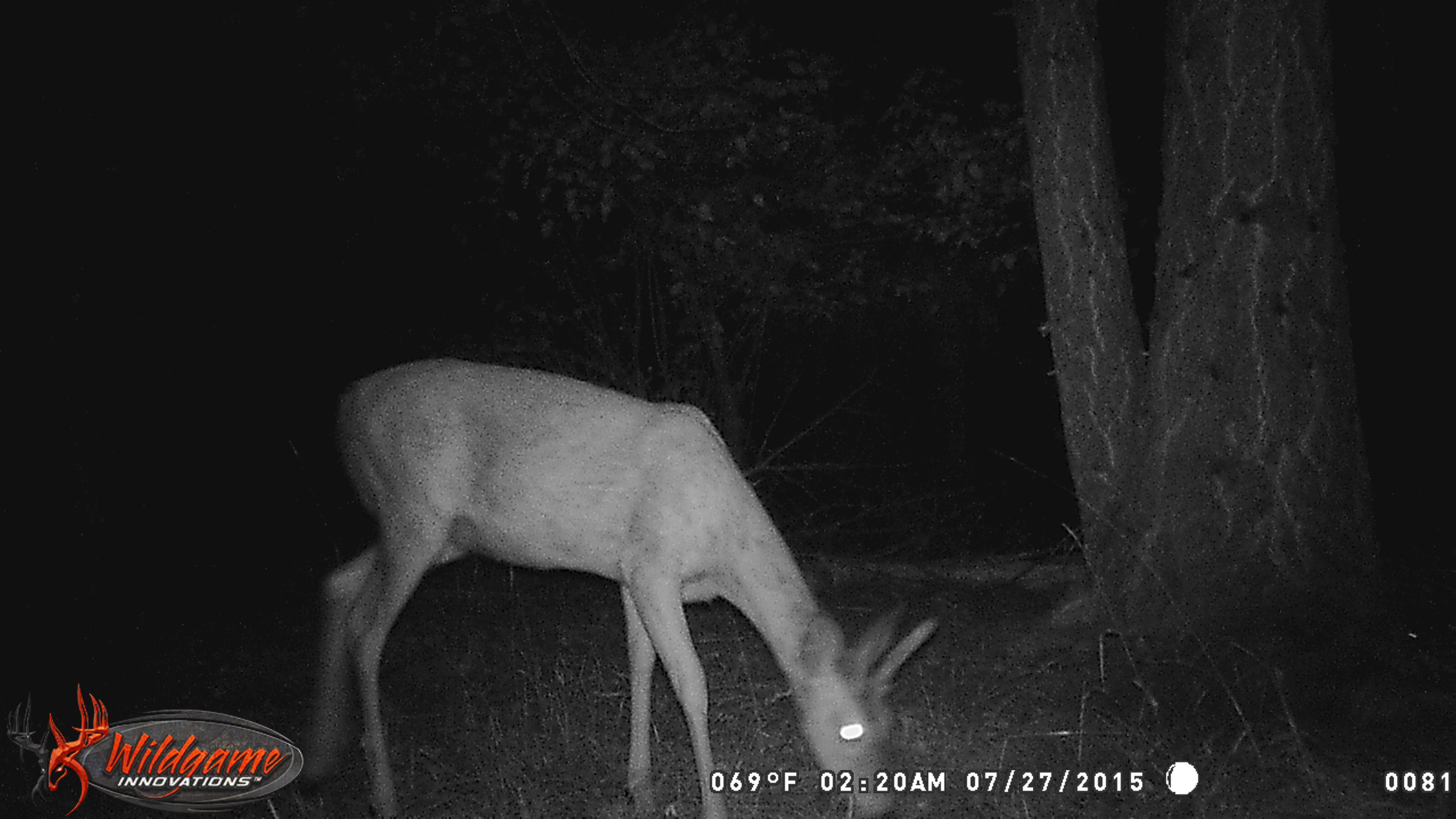 Wildgame Innovations Crush Illusion 8 LightsOut