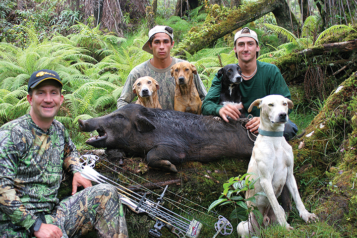 Bowhunting With Hounds: What You Need To Know!
